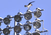 Ospreys are drawn to utility poles. This one was trying to build a nest on top of the lights at Whitehouse Field in Harwich. KAT SZMIT PHOTO  (photo: Kat Szmit)