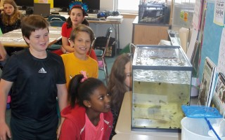 Monomoy Middle School science students observe spadefoot toad tadpoles in a tank in their classroom. Students are participating in a project to promote the Cape population of the rare amphibian. LEE ROSCOE PHOTO  (photo: )
