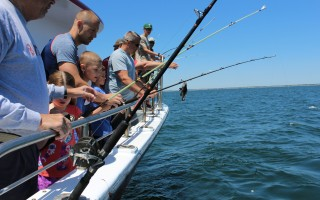 A black sea bass is landed by one of the anglers fishing on the Cap'n Kid over the new reef  built this spring 2.8 miles south of Saquatucket Harbor. WILLIAM F.GALVIN PHOTO  (photo: William F. Galvin)
