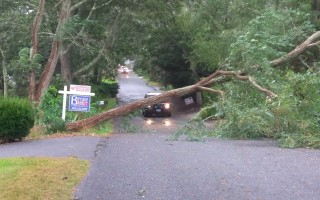A downed tree on Vacation Lane, Harwich.  ALAN POLLOCK PHOTO  (photo: Alan Pollock)