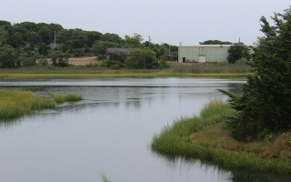 The Handler property, which town officials are discussing as a potential acquisition, sits on 3.14 acres along the edge of the inner Allen Harbor marsh and extends to Route 28. WILLIAM F. GALVIN PHOTO  (photo: )