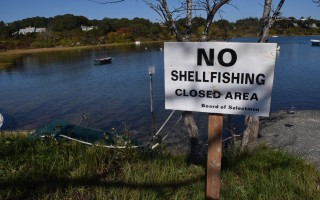 No shellfishing signs around Stage Harbor and other Nantucket Sound areas were taken down Monday after a nearly month-long shellfish closure was lifted. FILE PHOTO  (photo: )