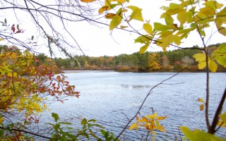 The Harwich Conservation Trust is holding a fund-raising drive to protect 1,000 feet of shoreline on Cornelius Pond. COURTESY PHOTO GUS ROMANO  (photo: Gus Romano)