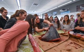 Marianne Long, education director of the Atlantic White Shark Conservancy, leads members of the Monomoy STEMinist Club in the dissection of a thresher shark head on Jan. 11.  (photo: Kat Szmit)