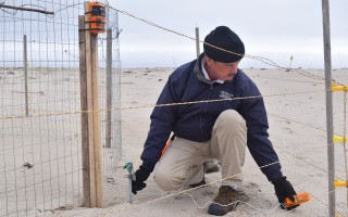 Assistant Conservation Agent Paul Wightman tests the voltage of electrified exclosures set up to conditions coyotes to avoid the structures, which are also set up around active plover nests. TIM WOOD PHOTO  (photo: )
