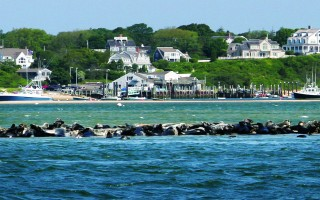 Seals hauled out in Chatham Harbor. FILE PHOTO  (photo: Alan Pollock)