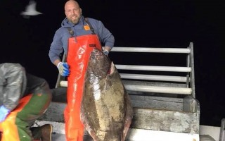 Fisherman Nick Muto, who is participating in a new halibut study, showing off one of the storied fish. PHOTO COURTESY OF MARDER TRAWLING  (photo: Courtesy Marder Trawling)