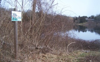 Orleans Conservation Trust land abuts Uncle Harvey's Pond.  FILE PHOTO  (photo: Ed Maroney)