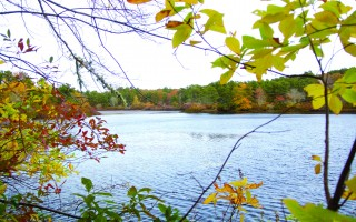 A view of the scenic splendor of Cornelius Pond, which the Harwich Conservation Trust seeks to preserve. GUS ROMANO PHOTO  (photo: Gus Romano)