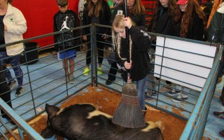 Barnyard animals are a major draw for people attending the annual Meet Your Local Farmers event to be held on Saturday at the community center. WILLIAM F. GALVIN PHOTOS  (photo: )