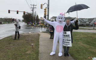 The Easter Bunny visited picketers in East Harwich Sunday, hours before the strike ended. TIM WOOD PHOTO  (photo: Tim Wood)