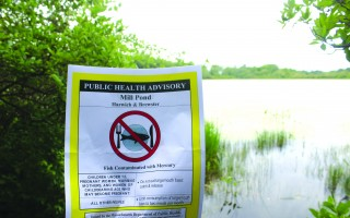 Public Health Advisories have been posted at White and Mill ponds in Harwich cautioning people not to eat fish caught there because of high mercury contamination. WILLIAM F. GALVIN PHOTO  (photo: William F. Galvin)