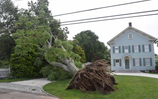 A massive tree down on Cross Street in Chatham. TIM WOOD PHOTO  (photo: )