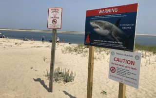 Shark warning signs, like this one at Andrew Harding's Lane beach, have been put up at all town beaches and many town landings. TIM WOOD PHOTO  (photo: Tim Wood)