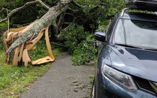 A tree toppled on a vehicle on Stony Hill Road during last Tuesday's storm. ALAN POLLOCK PHOTO  (photo: Alan Pollock)