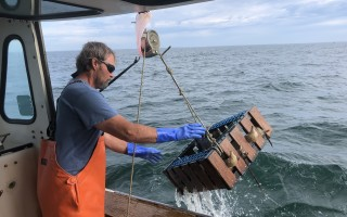 Ron Braun pulls a conch pot aboard the Peggy B II. DOREEN LEGGETT PHOTO  (photo: Doreen Leggett)
