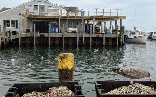 The new deck at the fish pier is visible from the South Jog, where it's business as usual for fishermen and gulls. ALAN POLLOCK PHOTO  (photo: Alan Pollock)