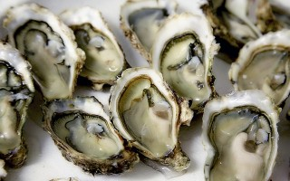 Oysters. PATRICIA ALEXENDRE PHOTO  (photo: Patricia Alexandre / Pixabay)