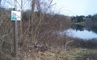 Pending the select board's final approval Nov. 4, a notice of intent will be filed with the conservation commission to review a proposed alum treatment for polluted Uncle Harvey's Pond. FILE PHOTO  (photo: )