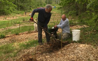 "Food Forest Initiative core member Patrick Otten (Harwich) and Tom Fettig (Orleans) planting edible species at the Harwich Forest Garden ""Walking Commons"" last spring. COURTESY PHOTO 