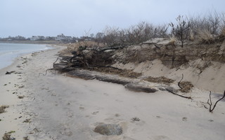 The beach between Claflin Landing and the fish pier, most of which is owned by Chatham Bars Inn, has seen heavy erosion in recent months. CBI is proposing to add more sand to combat the retreat of the shoreline. TIM WOOD PHOTO  (photo: Tim Wood)