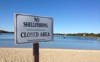 Shellfishing along the Cape's south coast, including Nantucket Sound, was banned by the state Monday due to a potentially toxic phytoplankton bloom. TIM WOOD PHOTO  (photo: )