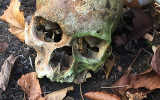 A human skull found on the grounds of the Atwood House Museum in December was discovered two years ago on a Chatham beach. CHATHAM POLICE PHOTO  (photo: )