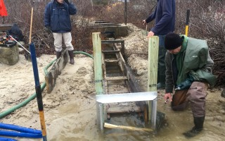 State Division of Marine Fisheries staff worked with the town's natural resources department to install a new aluminum floating sluiceway extension where Long Pond and Princess Brook connect. The new structure improved river flow allowing herring fry to migrate back to the ocean. PHOTOS COURTESY OF HEINZ PROFT  (photo: )