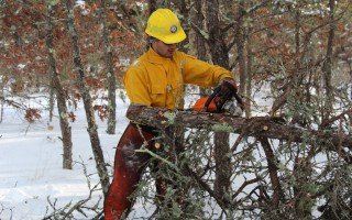 AmeriCorps of Cape Cod fire corps member Sam Gilvarg of Framingham cuts pitch pines at Thompson's Field on Monday.  WILLIAM F. GALVIN PHOTO  (photo: William F. Galvin)