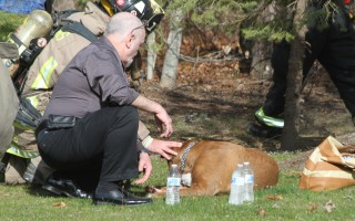 Sasha was rescued from a house fire off Standish Circle on April 15. ALAN POLLOCK PHOTO  (photo: Alan Pollock)