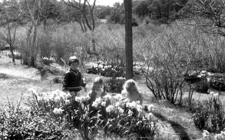Matthew Whelden, K. Ohman and Jennifer Whelden admire the spring bulbs at Ralph Sylvan's famous Chatham gardens. 1975. FILE PHOTO.  (photo: )