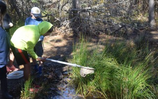 Students use a dip net to sample life in the vernal pool.  (photo: )