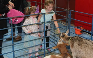 "The goats are a big attraction for the younger attendees at the ""Meet Your Local Farmers"" event to be held at the community center on Saturday. CHRONICLE FILE PHOTO  (photo: William F. Galvin)"