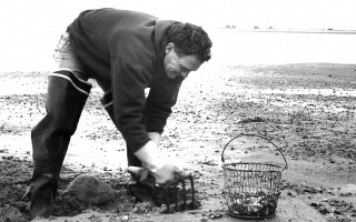 Shellfisherman Dave Howe of Chatham takes advantage of the low tide to dig a few steamers along Chatham Harbor. 1998. FILE PHOTO  (photo: )