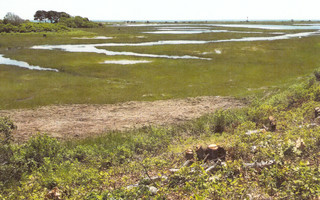 A view of the coastal bank off Taylor's Pond Road where some 62 trees were removed without conservation commission approval last June. After months of negotiations, the conservation commission last week approved an enforcement order requiring restoration of the property. TOWN OF CHATHAM PHOTO  (photo: )