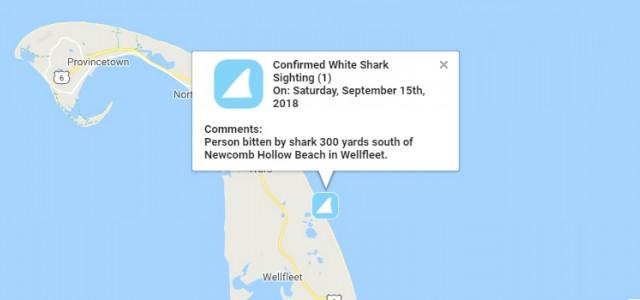 Fatal Shark In Wellfleet | Cape Cod Chronicle on
