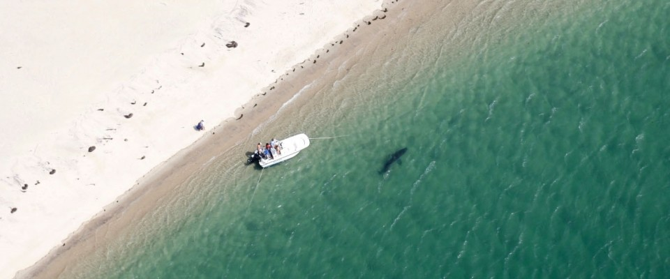 Family Has Close Encounter With 14 Foot Shark In Pleasant Bay Cape Cod Chronicle