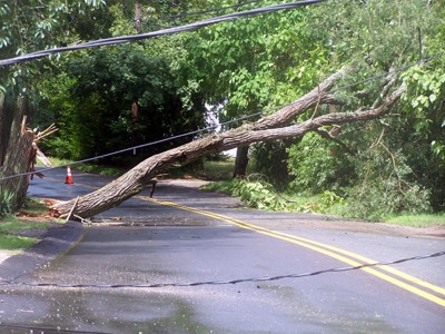 Access to Bridge Road was cut off by a fallen tree.  ED MARONEY PHOTO